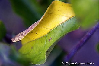 Fotografie - Ako sa leto mení na jeseň - 3185712