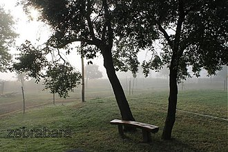 Fotografie - Lavička v daždi - 3342294