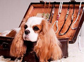 Pre zvieratká - ORIENT kolekcia - 3437936