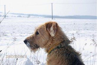 Fotografie - Sneh - kam oko dovidí - 3451077