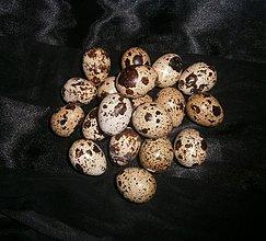 Dekorácie - Vajíča vyfúknuté- 10ks - 3491576