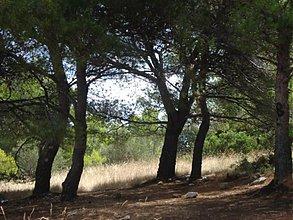 Fotografie - pomedzi stromy - 3517036