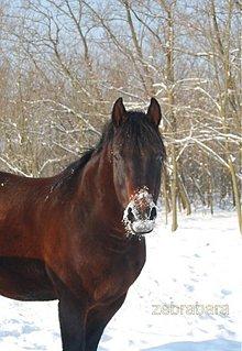 Fotografie - Chuť snehu - 3564197