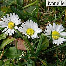 Fotografie - Januárové krásky - fotografia - 3565022