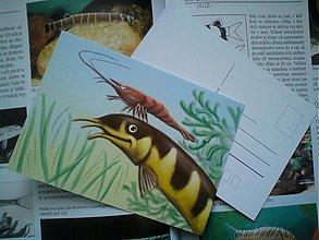 Papiernictvo - Akváriové bytosti - A6 print / milé pohladnice (rôzne druhy) - 3675097