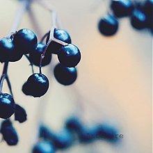 Fotografie - Nostalgia II. - 3701741
