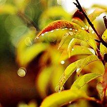 Fotografie - Vôňa dažďa - 3701777