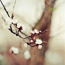 Fotografie - Príbeh jedného stromu - 489283