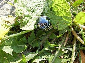 Prstene - Čierna perla - 527782