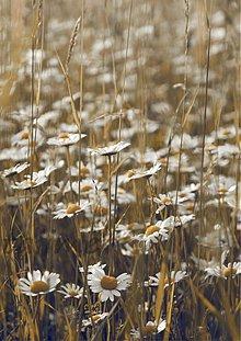 Fotografie - ukryté v tráve... - 609584