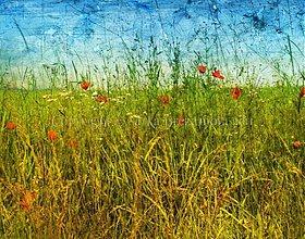 Obrazy - SKRYTÁ VO VYSOKEJ TRÁVE 120x70 cm - 638296