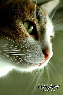 Fotografie - Moja krásavica - 699563