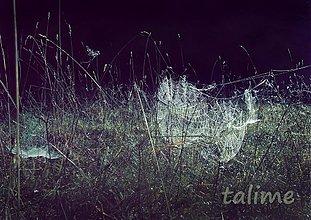 Fotografie - svet zmotaný z pavučiniek.. - 755579
