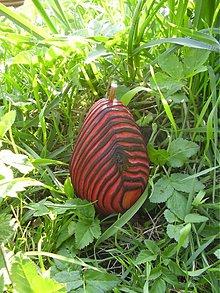 Rúška - RED tiger pear - 857819