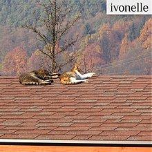 Fotografie - Mačky na novembrovej streche - fotografia - 886756